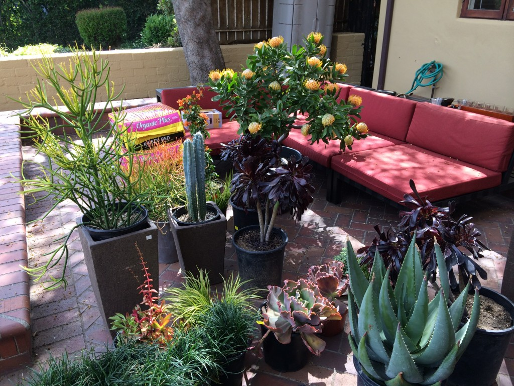 We went with a succulent garden, perfect for this dramatic area.